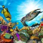 متحف الأحياء المائية: مستودع الأسماك النادرة