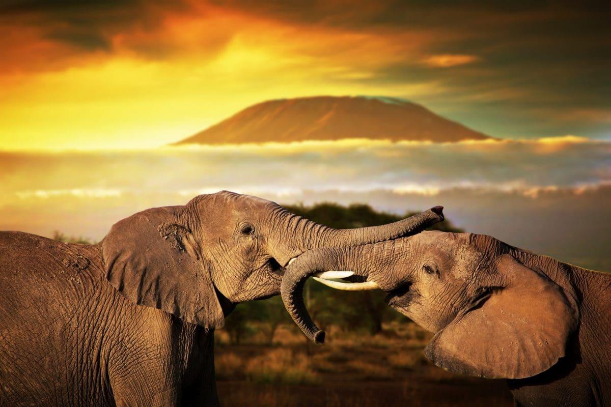 أفريقيا - مسارات