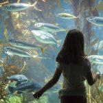 متحف الحياة البحرية: المتحف الأكثر شعبية في إستونيا