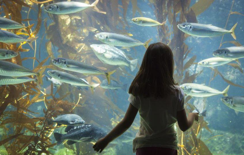 إستونيا - متحف الحياة البحرية: المتحف الأكثر شعبية في إستونيا