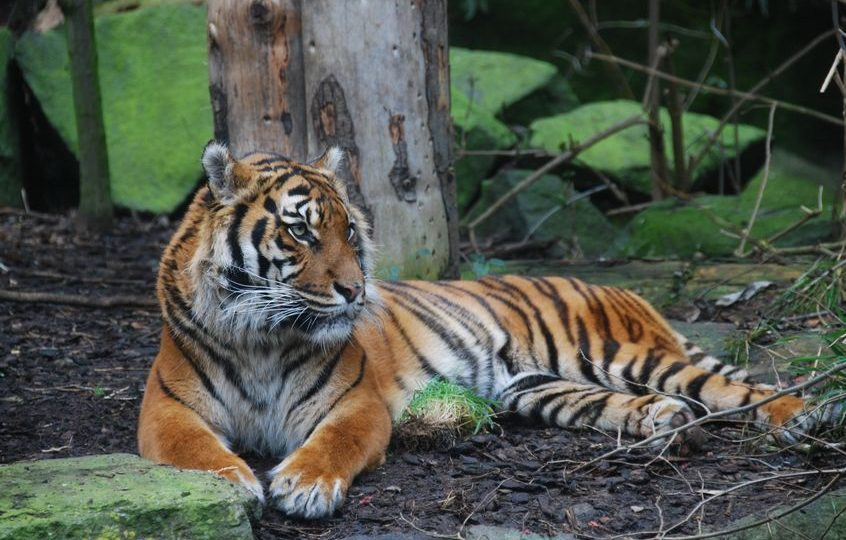 إسكتلندا - حديقة حيوان إد نبره ومنتزه هايلاند للحياة البرية