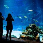معرض ديب سي وورلد للأحياء المائية