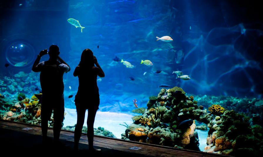 إسكتلندا - معرض ديب سي وورلد للأحياء المائية