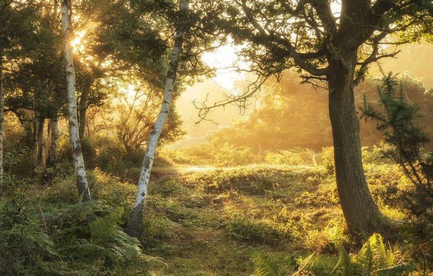 إيرلندا الشمالية - منتزه تولي موري فوريست