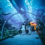 أكواريوم دبي: حديقة مائية مخصصة للحيوانات