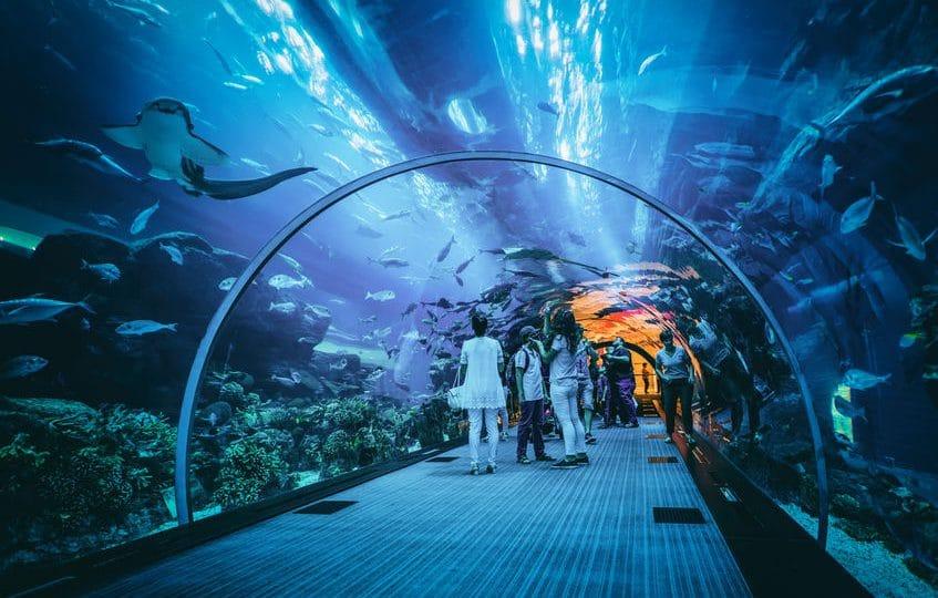 الإمارات - أكواريوم دبي: حديقة مائية مخصصة للحيوانات