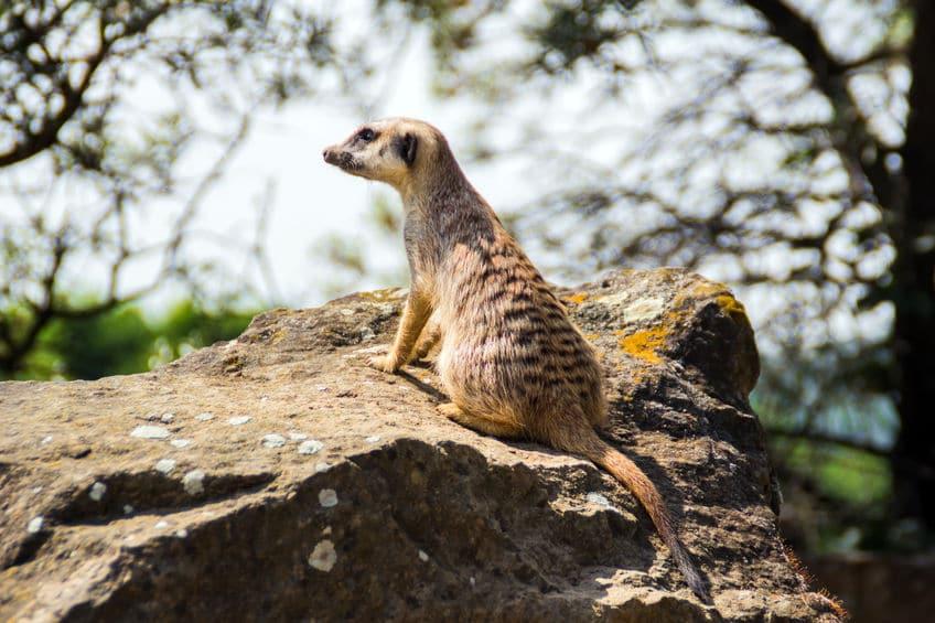 التشيك - حديقة براغ للحيوانات: أكبر حديقة للحيوانات في التشيك