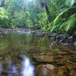 حديقة بابيلوت: أهم الحدائق الاستوائية في دومينيكا