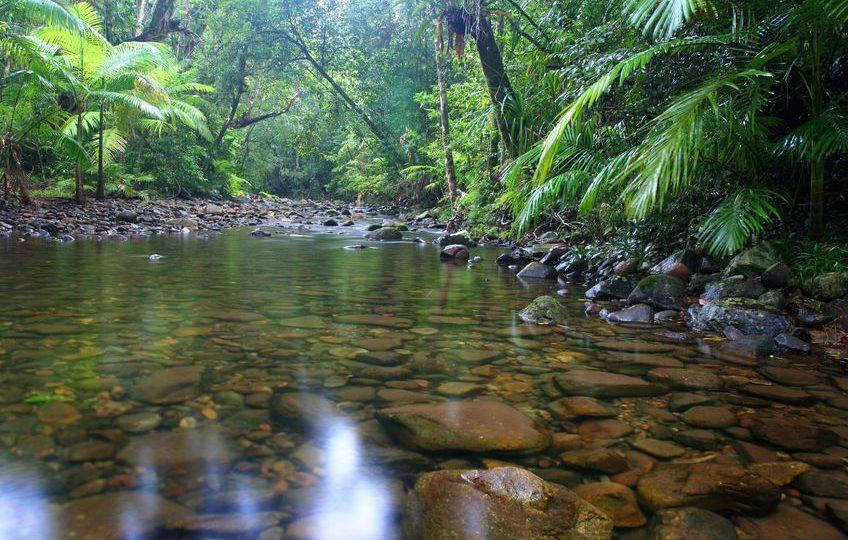 الكاريبي - حديقة بابيلوت: أهم الحدائق الاستوائية في دومينيكا