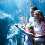 لاجوناريوم: حدائق مُخصصة لعرض المخلوقات المائية