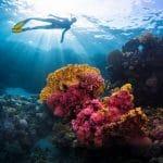 مركز الغوص BlueDolphin