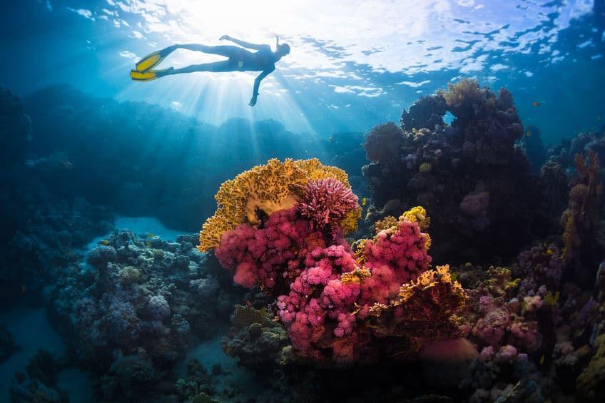 اليونان - مركز الغوص BlueDolphin