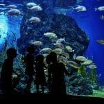 المركز الوطني البحري: تحفة برمنغهام النادرة