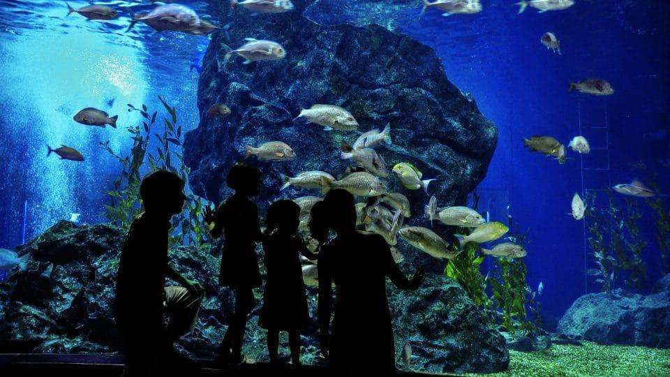 برمنغهام - المركز الوطني البحري: تحفة برمنغهام النادرة