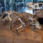 متحف التاريخ الطبيعي: أكبر متاحف رومانيا على الإطلاق