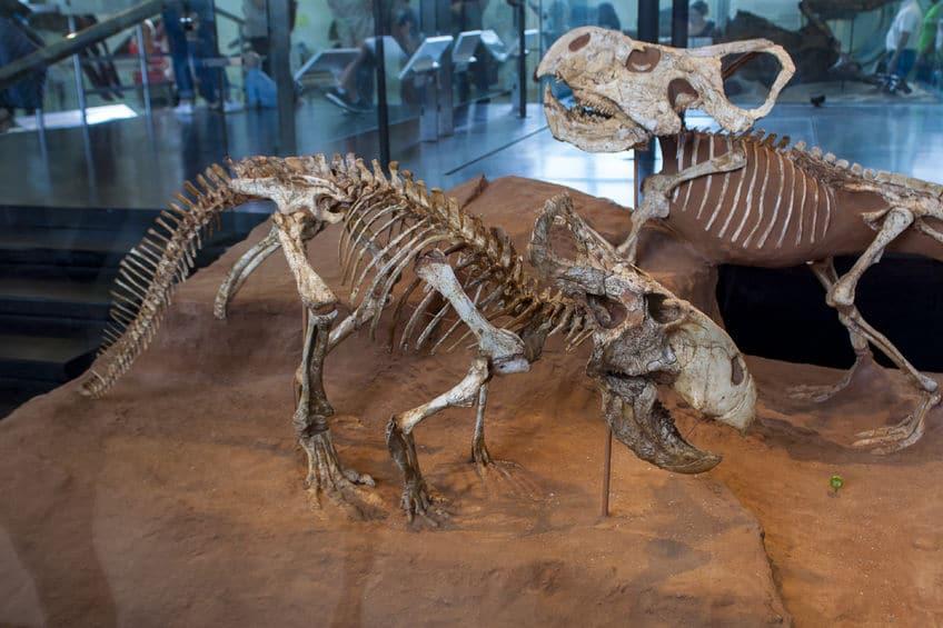رومانيا - متحف التاريخ الطبيعي: أكبر متاحف رومانيا على الإطلاق