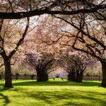 حديقة السبيل