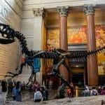 متحف التاريخ الطبيعي في جينيف