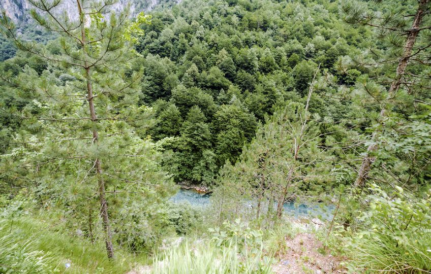 صربيا - الحديقة الوطنية تارا Tara