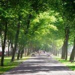 حديقة ديزنتاري فورست