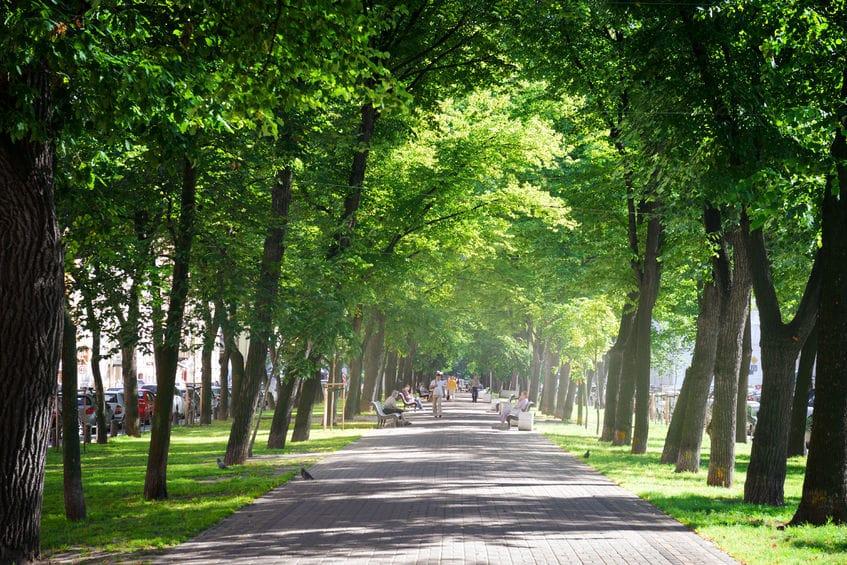 لاتفيا - حديقة ديزنتاري فورست