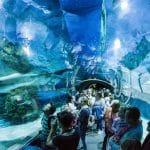 تروبيكاريوم: حوض مميز للأسماك في هنغاريا