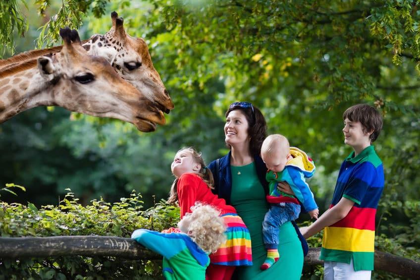 ويلز - حديقة حيوان Greenacres